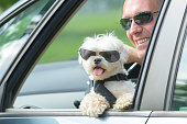 istock Dog and his owner traveling in a car 1141198279
