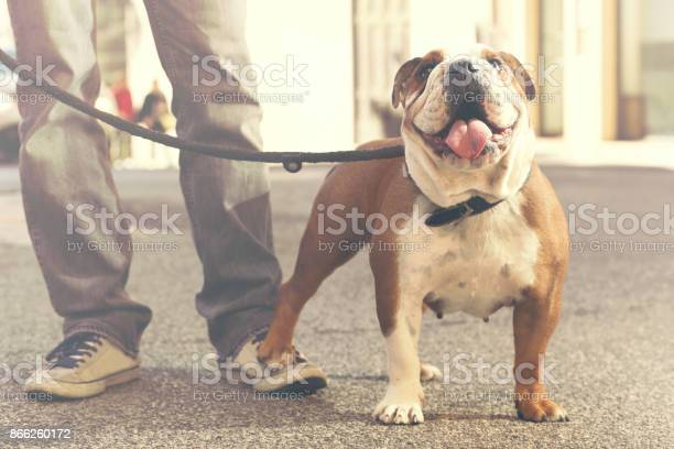 Dog and his owner walking on the street picture id866260172?b=1&k=6&m=866260172&s=612x612&h=qunhaztxlxh40qlzxikin3tm mbeuec3o6wngkiwa7y=