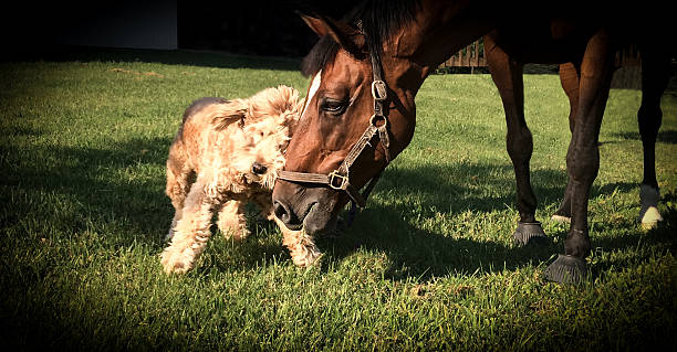 dog and horse friends - kellyjhall stock pictures, royalty-free photos & images