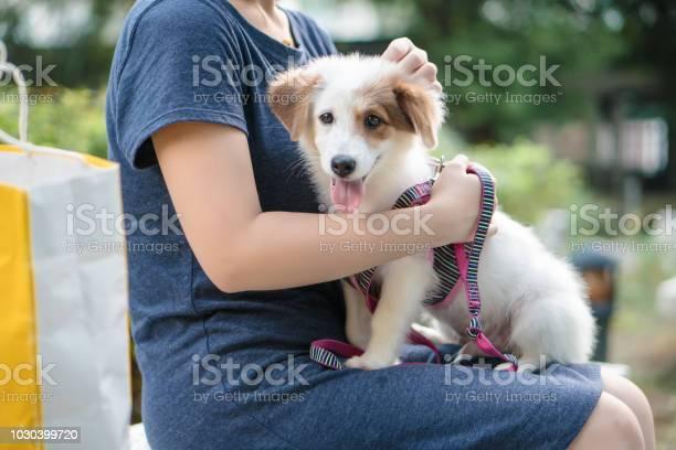 Dog and hostess park background picture id1030399720?b=1&k=6&m=1030399720&s=612x612&h=tdw4mhysc204yyivp993ay3q77adx u46dqag3r9vaw=