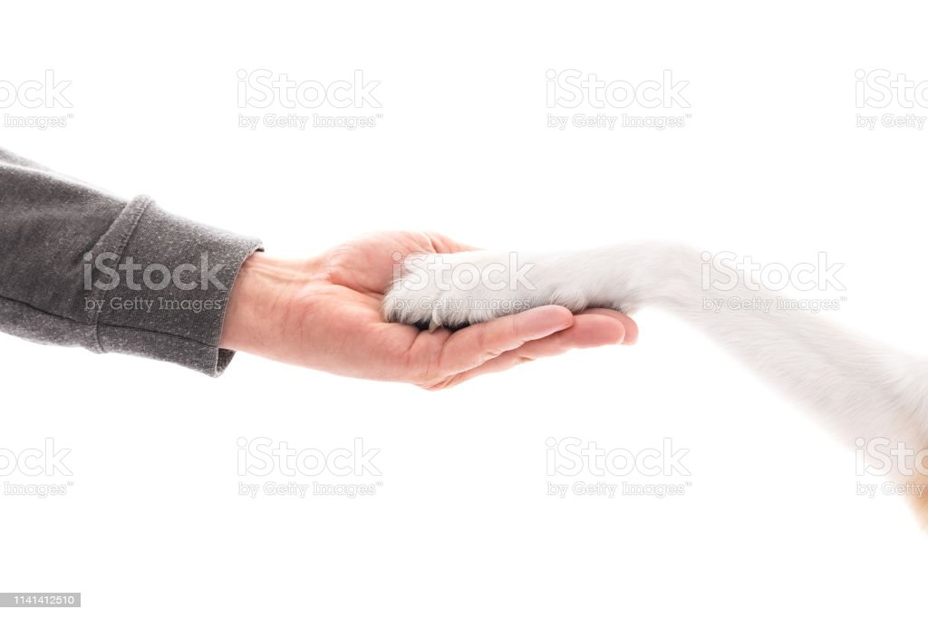 Dog and human as friend and partner, hand and paw on each other,...