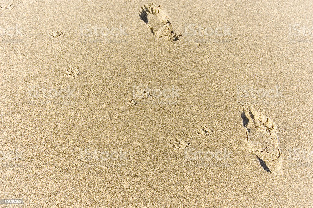 dog and human footprints royalty-free stock photo