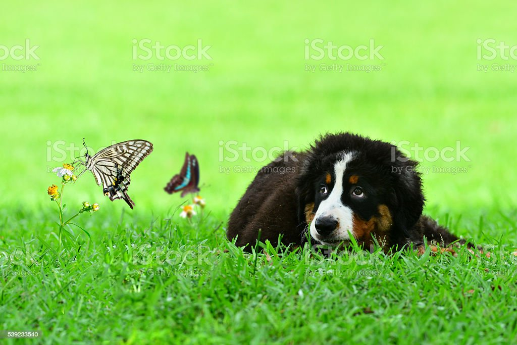 Perro y INSECTOS foto de stock libre de derechos