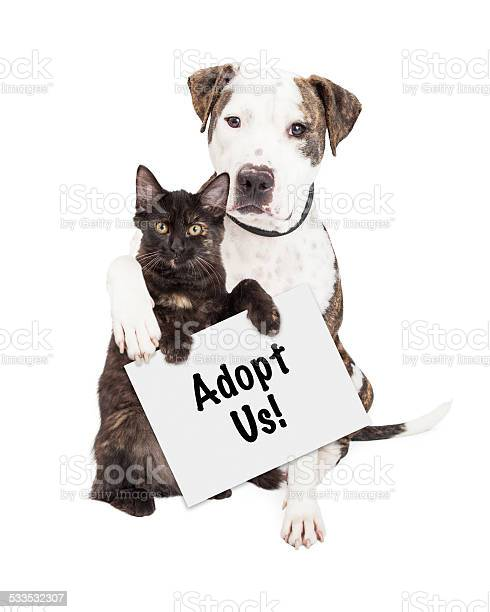Dog and kitten adopt us sign picture id533532307?b=1&k=6&m=533532307&s=612x612&h=tq1vrz gpucbwumea612qh4vq7puc12emi6tqmnfeik=