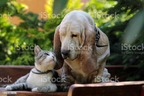 Dog and kitten friends picture id1000918836?b=1&k=6&m=1000918836&s=612x612&h=jqpwerli2hqhl7wob6tk344ba pcm1phhxoz9kzoprk=
