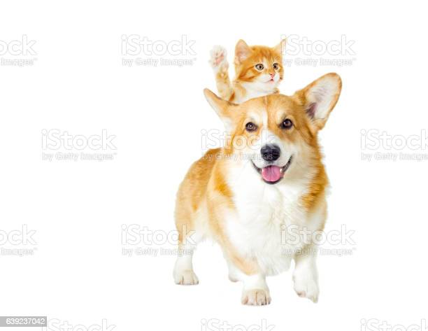 Dog and kitten looking on a white background picture id639237042?b=1&k=6&m=639237042&s=612x612&h=7zkf6a8zdryhi tlqh vf7lrs4rhjoztizzd rmzzmg=