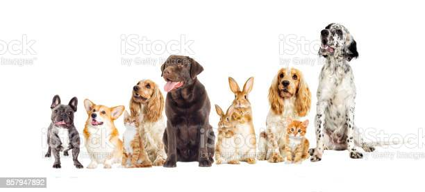 Dog and kitten on a white background picture id857947892?b=1&k=6&m=857947892&s=612x612&h=wy15umgy745mx8v4jm59q8zjsfsc4jwqx3ahg9ozn7e=