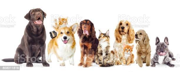 Dog and kitten on a white background picture id858311816?b=1&k=6&m=858311816&s=612x612&h=vulpnnvtoo3ntdxscjwrl6wxfzaveslebwwmwv 8fs8=