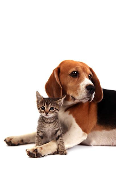 Dog and kitten picture id182246947?b=1&k=6&m=182246947&s=612x612&w=0&h=6sza4ahdsbhoxudwywvgrxnn7ohyua449xfjsnawrtw=