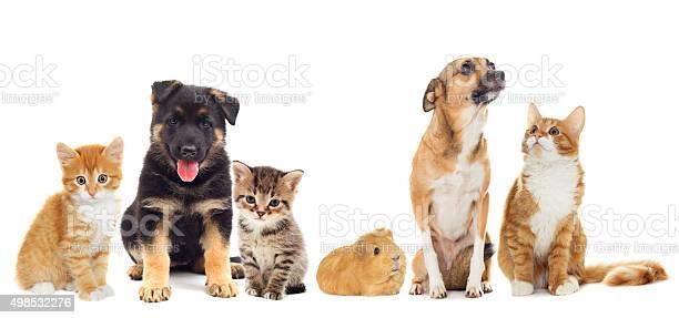 Dog and kitten picture id498532276?b=1&k=6&m=498532276&s=612x612&h=iphqqmq9 w16sbrltgyq8kyf0lxja1e0eidjlycjk3q=