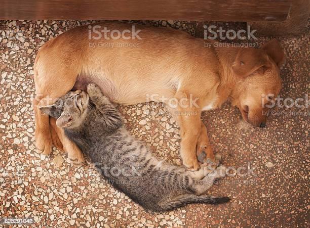 Dog and kitten picture id623291042?b=1&k=6&m=623291042&s=612x612&h=phxdhbaqm87jykw7wct5zbh upmqcxc9emdj32pmjqs=