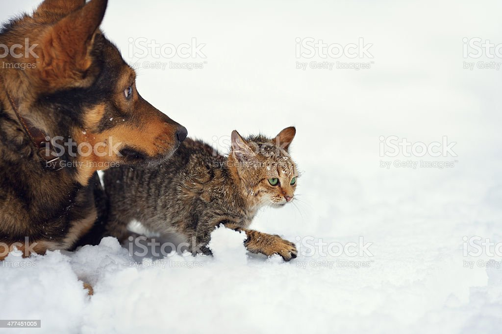 Dog and kitten playing in the snow royalty-free stock photo