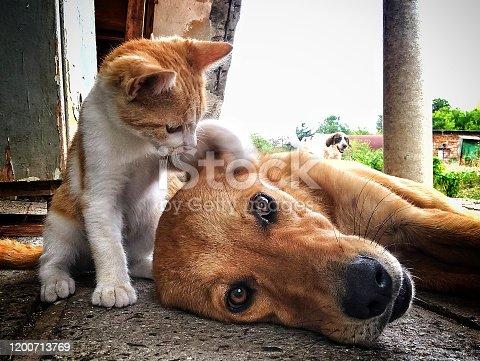 best friends puppy and kitten.