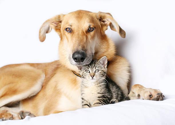 Dog and kitten snuggling together picture id186804337?b=1&k=6&m=186804337&s=612x612&w=0&h=vu6xjctj7otqaarrkwx9zr1i7yvur8rg 2vxtqlgcq8=