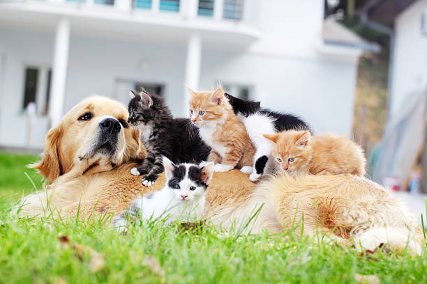 Dog and little cats are lying outdoor picture id183420151?b=1&k=6&m=183420151&s=612x612&w=0&h=r7bsn1lghz 4kczlqu6vgbehap4mj84cpku1k7kg8ce=