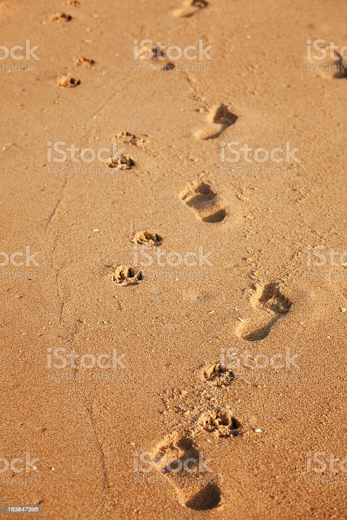 Dog and man footprints stock photo