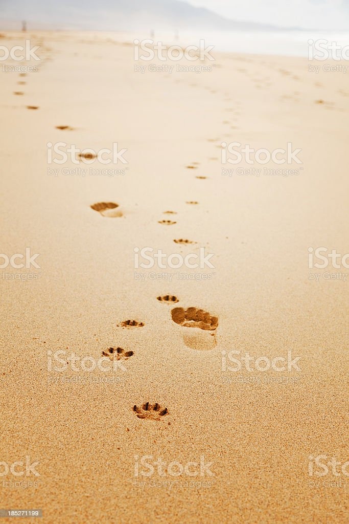 Dog and man footprints royalty-free stock photo