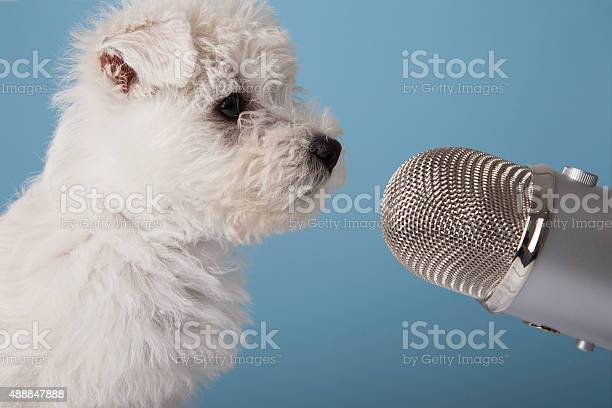 https://media.istockphoto.com/photos/dog-and-microphone-picture-id488847888?s=612x612