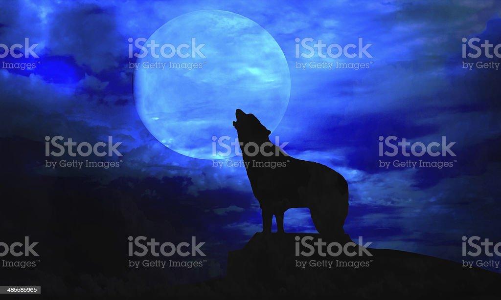 dog and moon stock photo
