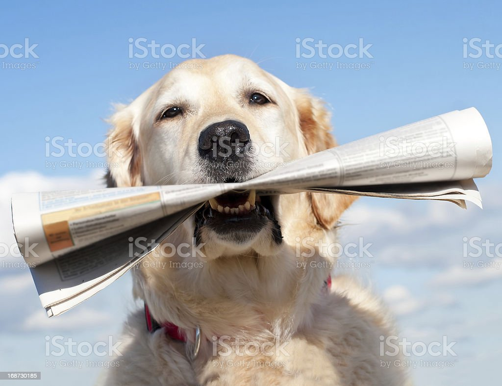 Dog and newspaper royalty-free stock photo