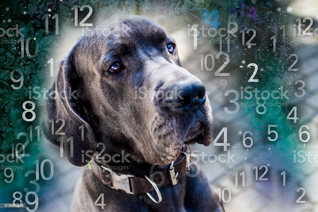Dog and numbers, numerology for animals stock photo