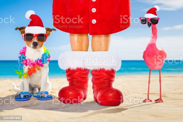 Dog and owner as santa claus on christmas at the beach picture id1044361632?b=1&k=6&m=1044361632&s=612x612&h=qgd5rym1nm0az3wrbgbi d9w2jitjvdlscqtpflekum=