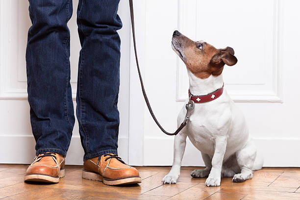 dog and owner stock photo