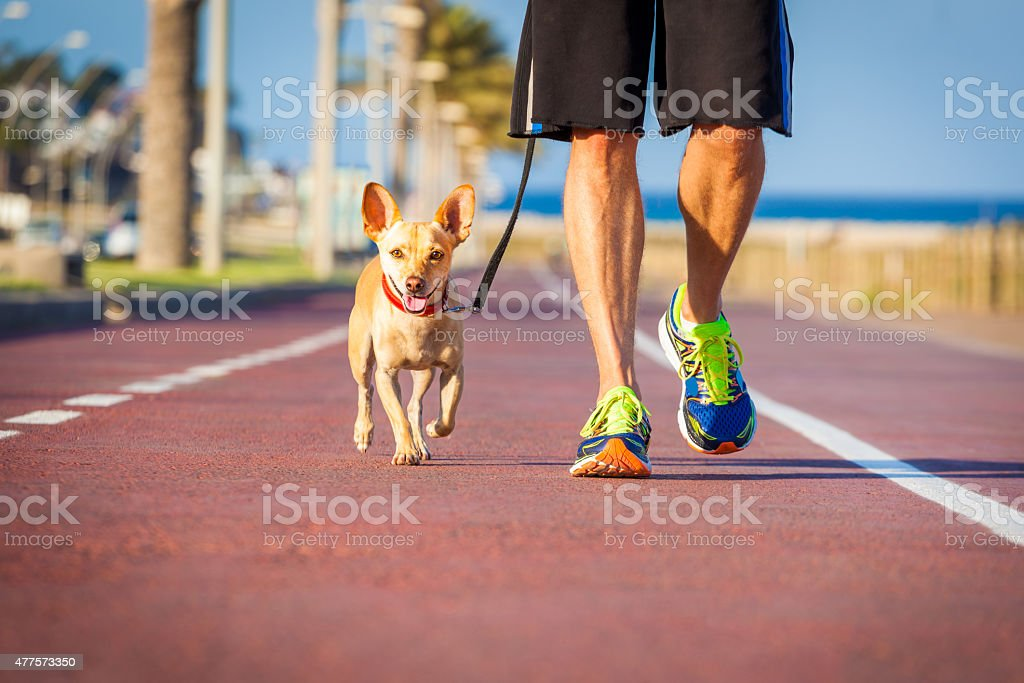 Dog and owner walking stock photo