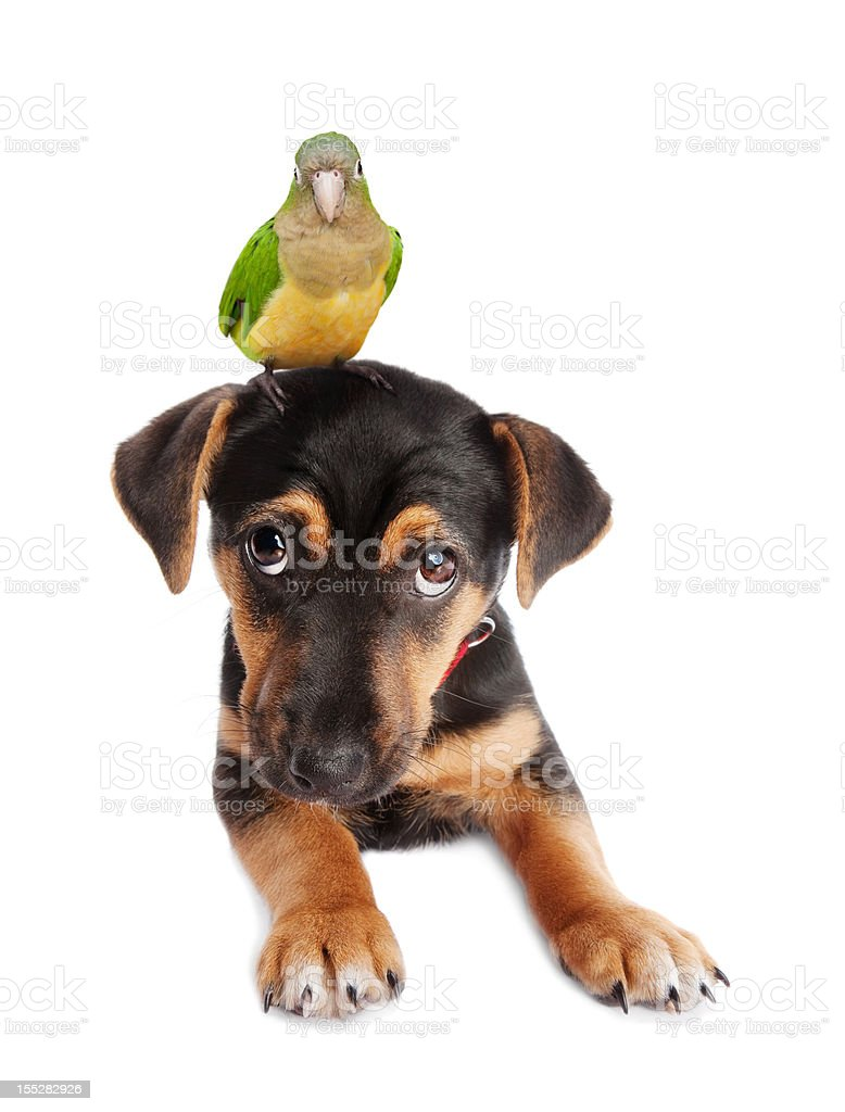 Dog and parrot royalty-free stock photo