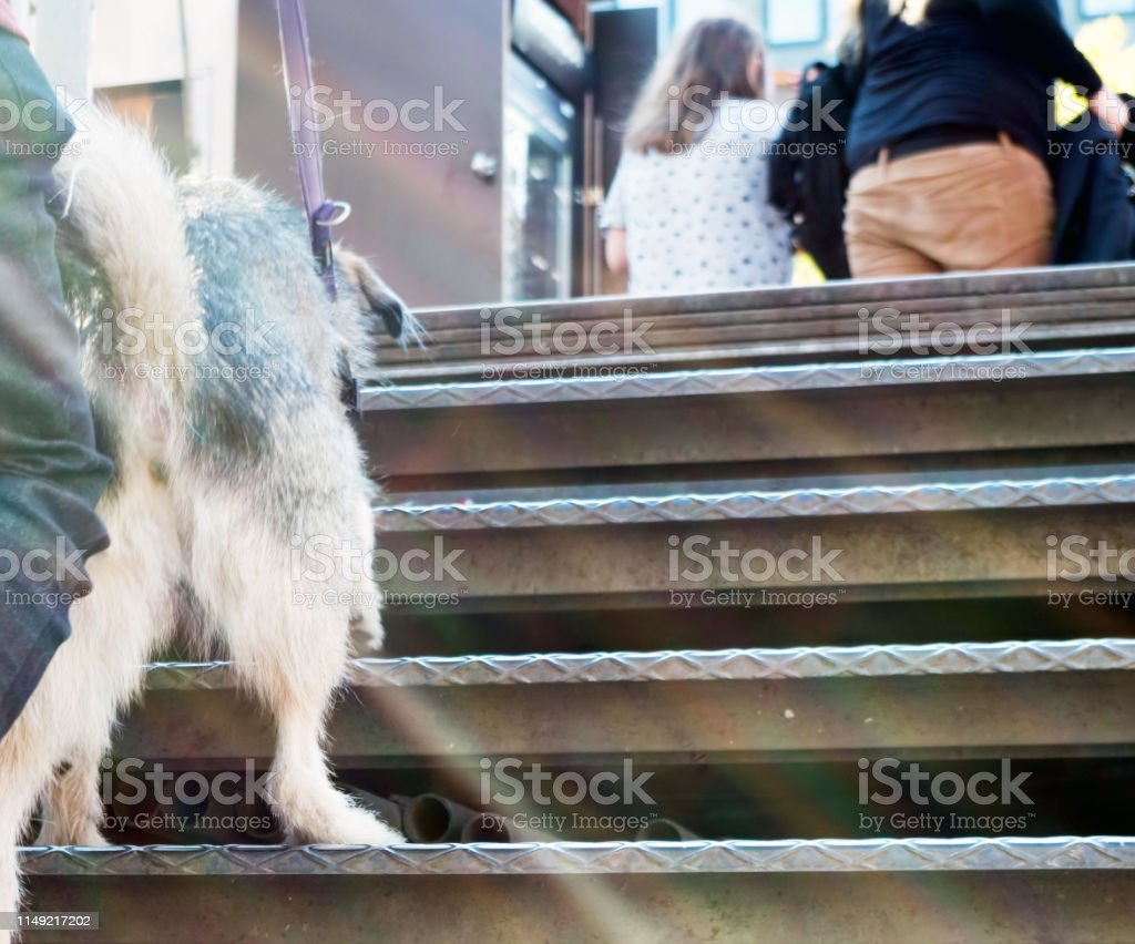 Dog on staircase by railing. Photo taken at public space in Berlin,...