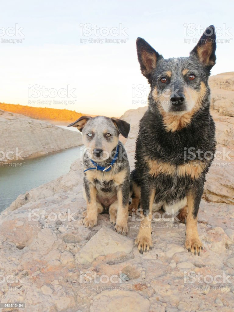 Dog and Puppy sitting on rocks at lake stock photo