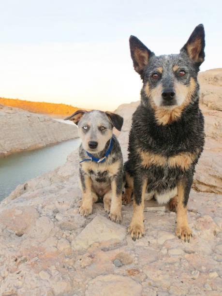 Dog and Puppy sitting on rocks at lake stock photo