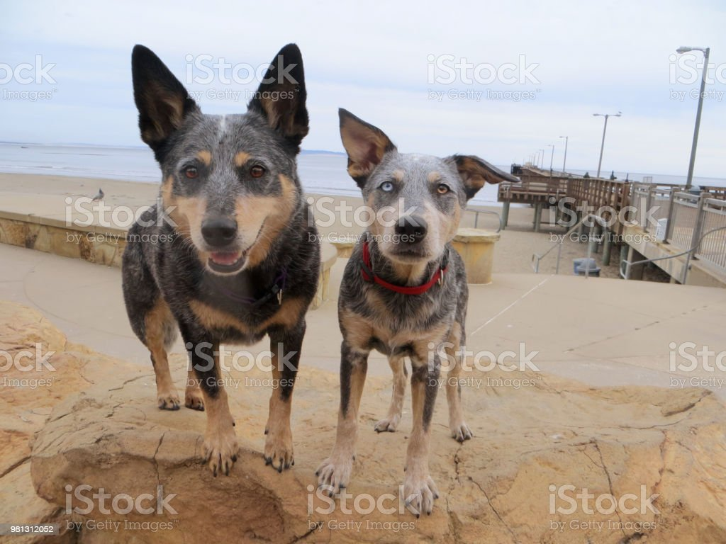 Dog and Puppy Standing on Rock at Beach stock photo