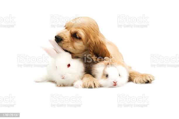 Dog and rabbit picture id176125137?b=1&k=6&m=176125137&s=612x612&h=1f9bljgm6jzzxskm9e rkk95pnbg3ydtoncwzhlyfqm=