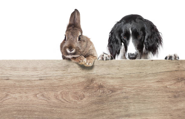 Dog and rabbit wood stock photo