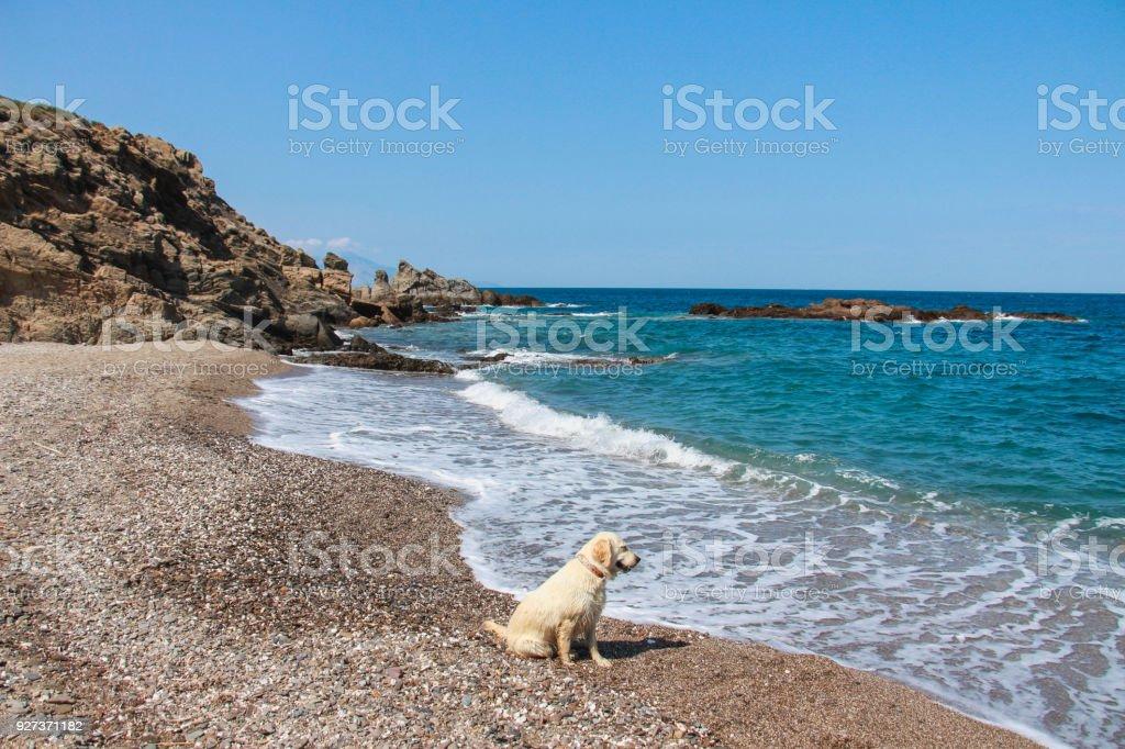 Dog and sea the dog watching sea waves at the shore Animal Stock Photo