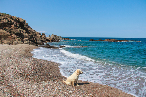 Dog And Sea Stock Photo - Download Image Now