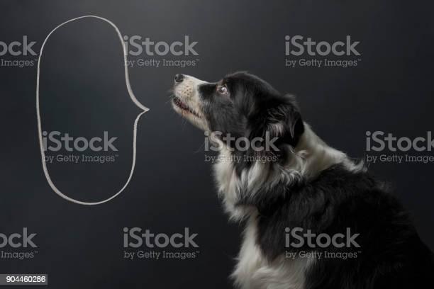 Dog and speech bubble picture id904460286?b=1&k=6&m=904460286&s=612x612&h=vyna0nj rzkcrku1wp3bg0pdrptnpccrzp lxl7wvce=