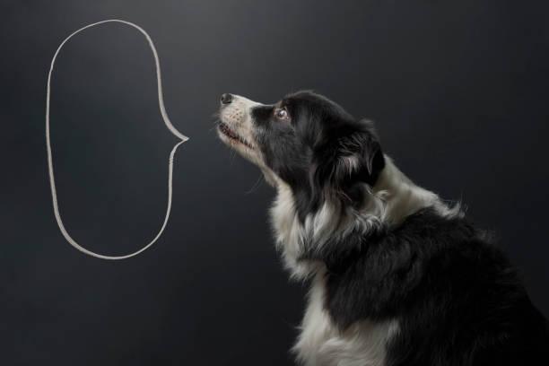 hund och pratbubblan - animal doodle bildbanksfoton och bilder