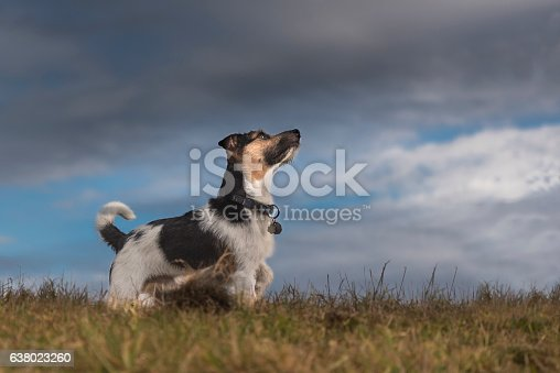 istock Dog and storm clouds - jack russell terrier 638023260
