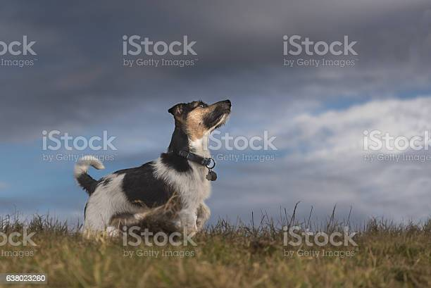 Dog and storm clouds jack russell terrier picture id638023260?b=1&k=6&m=638023260&s=612x612&h=p7hncb3hk1xxqx4giz7qzlm0fm3jntgn9wfukht1hxs=