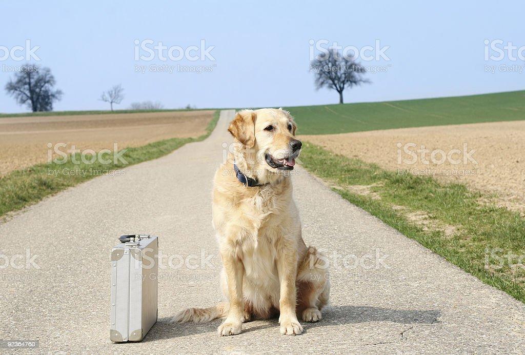Dog and suitcase royalty-free stock photo
