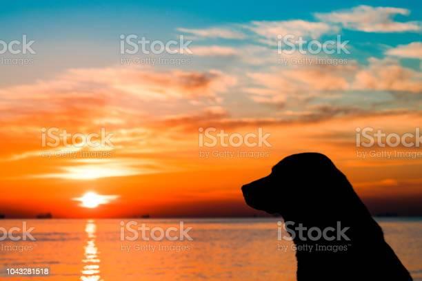 Dog and sunset picture id1043281518?b=1&k=6&m=1043281518&s=612x612&h=tbzezysquw du8qjclqj0mie4yvdnwskx5b0kh 4onw=