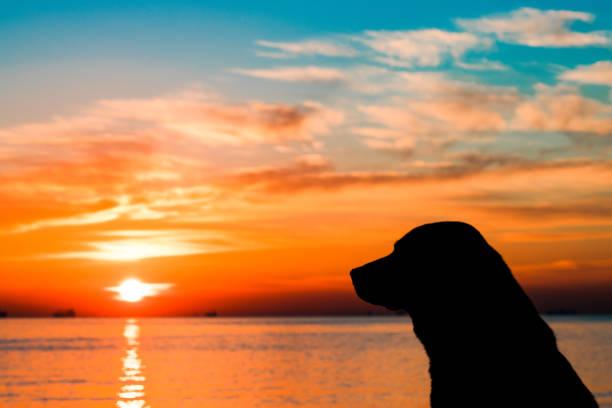 Dog and sunset picture id1043281518?b=1&k=6&m=1043281518&s=612x612&w=0&h=k7 w3xvrneaqokewvml vyzojmnmba9kw7uyhi ukxo=