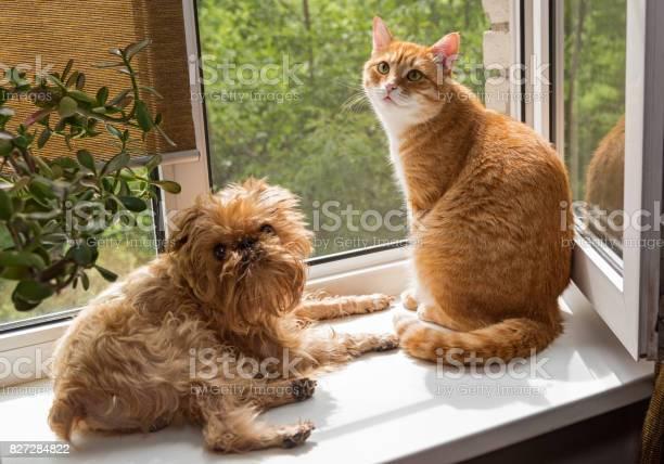 Dog and the cat on the window picture id827284822?b=1&k=6&m=827284822&s=612x612&h=vugpqffje56zt42ktmcjv dblrhmjloglscacrehb0g=