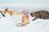 istock dog and the cat sleep together with toy on the bed. Close-up. 1254191364