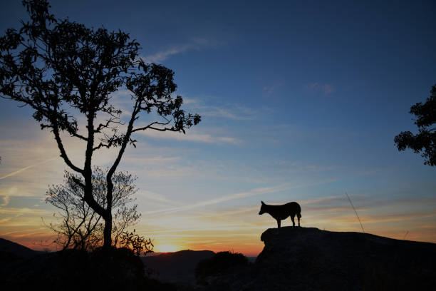 Silhuetas do cão e da árvore no nascer do sol em Brasil - foto de acervo