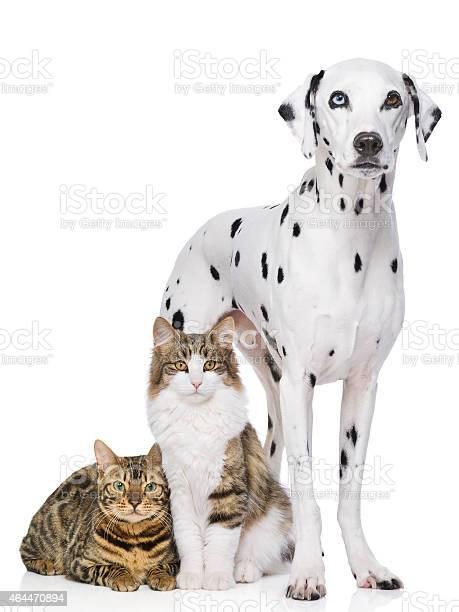Dog and two cats picture id464470894?b=1&k=6&m=464470894&s=612x612&h=tscr7qomsysipb1pfvj0iizzlddwowdhvjwgnba5yzy=