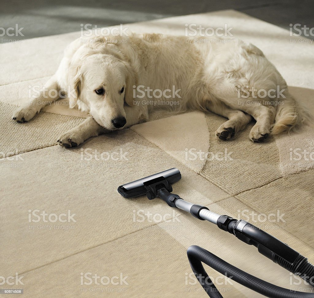 dog and vacuum cleaner stock photo