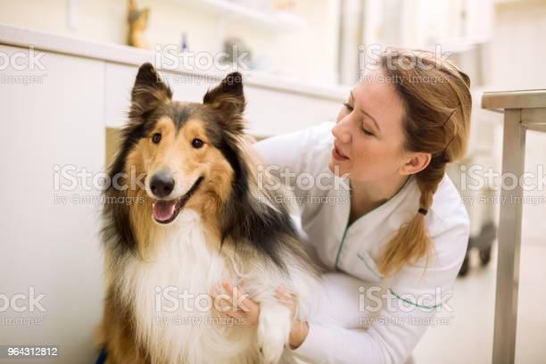 Dog and veterianrian at pet ambulance picture id964312812?b=1&k=6&m=964312812&s=612x612&h=ixbeau nkd1onevdulfk13pxwuosbfcijqrtfx4zva4=